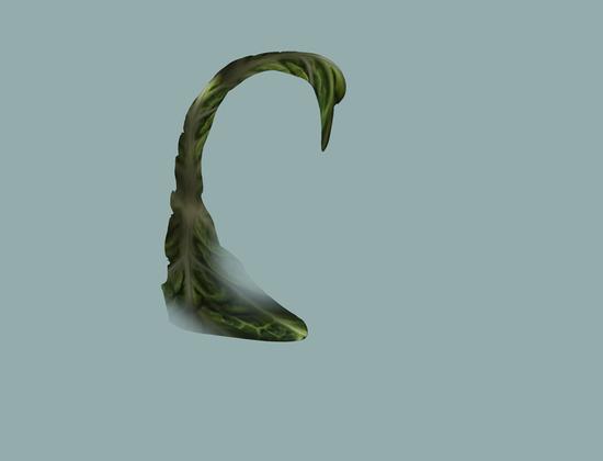 cabbage4.jpg