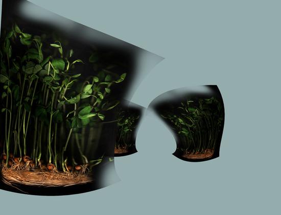 cabbage7.jpg