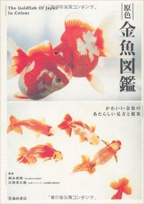 金魚の赤ちゃんはみな黒い色? かわいい金魚の見方