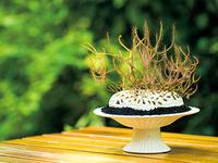輝く粘液で虫をキャッチ! 食虫植物ドロセラの美しさ