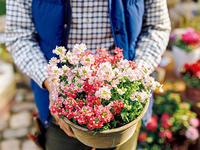 小花の5つの魅力