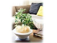 家具の上に置いて楽しむ観葉植物