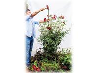 台風からバラを守る! 被害を最小限に抑える対策