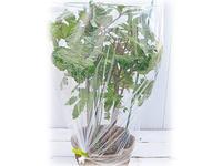 プランターの秋冬野菜 3つの寒さ対策