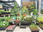 タネと苗 ホームセンターや園芸店はどう管理しているの?