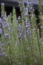 植物を「使う」という園芸